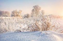 Boucles de neige Photos libres de droits