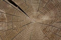 Boucles en bois sur le log d'extrémité images libres de droits
