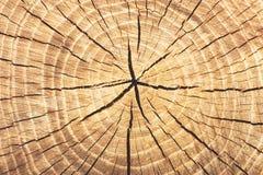 Boucles texturisées en bois de fond Images libres de droits