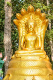Or Bouddha Photo stock
