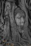 Bouddha envahi par des racines d'arbre Photo stock
