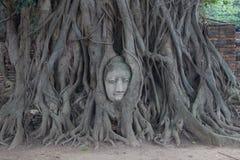 Bouddha et arbre Photo stock