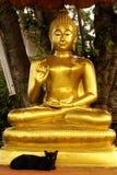 Bouddha et chat noir Photos stock