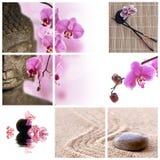 Bouddha et orchidée rose de phalaenopsis Image libre de droits