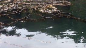 Boue et algues de mer sur l'eau calme de l'océan pacifique en Alaska banque de vidéos