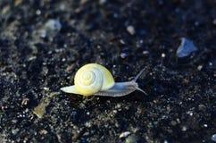 Boue jaune Photo libre de droits