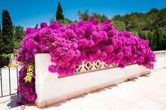 Bougainvilea Stockfoto