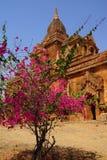 Bougainvilea blisko Ywa Haung Gyi Zdjęcia Royalty Free