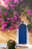 Bougainvillaea in Assos Royalty Free Stock Photography