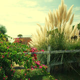 Bougainvillaea and reed on sky background. Landscape from Portug Stock Images