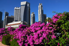 Bougainville singapore skyline Stock Images