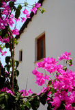 Bougainvillea. Rural house with climbers, Psematismenos, Cyprus Stock Photo