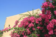 Bougainvillea. Pink bougainvillea against a yellow wall and the blue sky Royalty Free Stock Photos