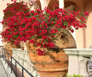 Bougainvillea. Large clay pots of red bougainvilla in courtyard lined with columns and arches royalty free stock photo