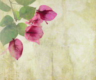 Bougainvillea artwork on cracked plaster Stock Photos