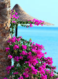 Bougainvillea and beach umbrella Stock Photography