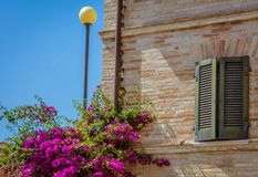Bougainvillea blooming on the facade of a historic villa in the Tuscan countryside.  Stock Photography