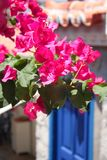 Bougainvillea and Blue Door in Greece Stock Photography