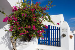 Bougainvillea and blue fence Royalty Free Stock Images