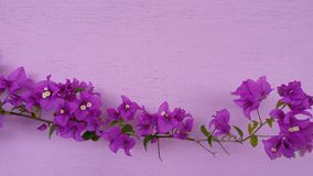 Bougainvillea color beautiful sightly flower Royalty Free Stock Photo