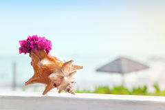 Bougainvillea in conch shell Royalty Free Stock Photo