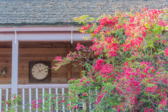 Bougainvillea decorating a balcony Stock Images