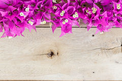 Bougainvillea flower on grain wood Royalty Free Stock Photos