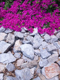 Bougainvillea flower Stock Photo