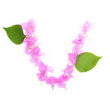 Bougainvillea flowers alphabet isolated on white background royalty free stock photos