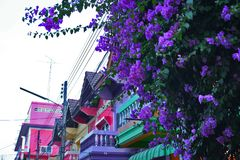 Bougainvillea Flowers Purple Houses Coloured Branch Tree. Wires Sky Balconies Magenta Cyan Yellow Purple Asia Asian Architecture Balcony Column stock photos
