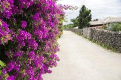Bougainvillea flowers Royalty Free Stock Photos