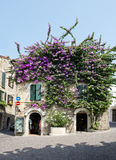 Bougainvillea Flowers at Sirmione Town Royalty Free Stock Photography