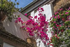 Bougainvillea and geranium decorate the walls of the house in Cordoba, Spain, 05/08/2017 stock photo
