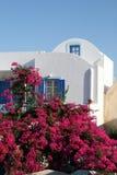 bougainvillea Greece domowy santorini Obraz Stock