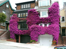 Bougainvillea house. House being taken over and devoured by the fast growing bougainvillea plant Royalty Free Stock Photography