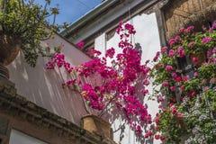 Bougainvillea i bodziszek dekorujemy ściany dom w cordobie, Hiszpania, 05/08/2017 zdjęcie stock