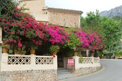 Bougainvillea and a man on a bench, Fornalutx, Majorca Stock Photos