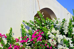 Bougainvillea marsa alam Stock Photos