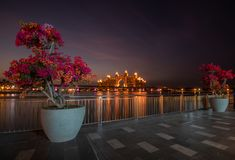 Bougainvillea on the new boardwalk Tne Pointe overlooking the Hotel Atlantis. Dubai, UAE royalty free stock image