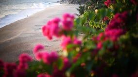 Bougainvillea and Orange Sunset above ocean Kerala stock video footage
