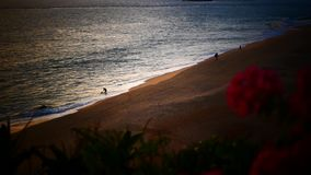 Bougainvillea and Orange Sunset above ocean Kerala stock video