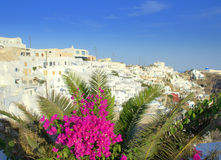 Bougainvillea,palm and Firostefani village,Santori Royalty Free Stock Photo