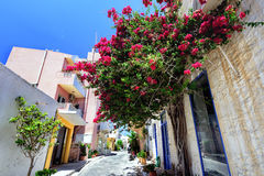 Bougainvillea paper flower on a stone wall of building Stock Photo