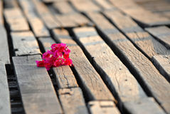 Bougainvillea [ Paper flower] on the wooden floor. Royalty Free Stock Photo