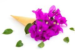 Bougainvillea papierowego kwiatu selekcyjna ostrość z płytką głębią Obrazy Stock
