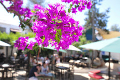 Bougainvillea in a patio in Ibiza Island, Spain Royalty Free Stock Images