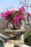 Bougainvillea. At Phetchburi province thailand. People may known about Kho Wang the old palace in thailand Stock Photos