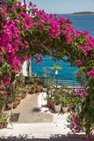 Bougainvillea - is a popular decoration cities in the subtropics Stock Photos