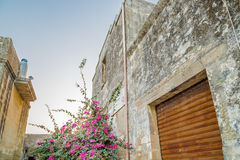 Bougainvillea in small fortified citadel. Bougainvillea flowers near walls of small fortified citadel of XVI century in Italy stock photo