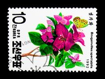 Bougainvillea spectabilis, International Stamp exhibition Geneva. MOSCOW, RUSSIA - NOVEMBER 24, 2017: A stamp printed in Democratic People's republic of Korea stock image